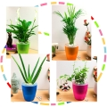 Plants in Self Watering Pot